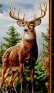 Deer Moutain